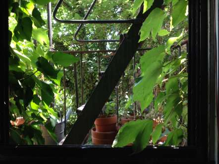 Julia's view looking out of a window onto a fire escape filled with plants and lush vines covering the exterior walls